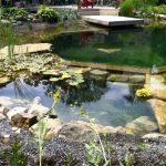 stony swimming pool line water lillies beautiful backyard lush vegetation picturesque natural swimming pool for house