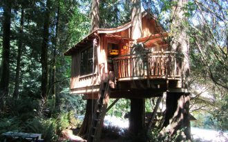 wonderful tree house with wooden wall