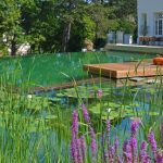 wooden bridge natural swimming pool beautiful water lillies green grass stony footpath white painted house beautiful natural pool ideas