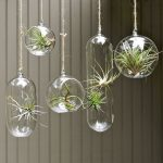 beautiful plant ornaments in various hanging clear glass pots in various shapes