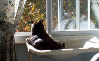 creative-simple-adorable-cool-wonderful-nice-dog-window-perch-with-elastic-design-concept-for-cat-and-has-nice-simple-frame-728x546