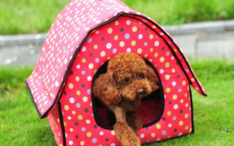 cute small dog crate in red and colorful polkadot patterns in the backyard