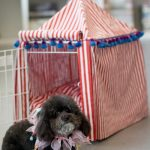 dog crate in small tent shape with red and white strip patterns for a cute puppy