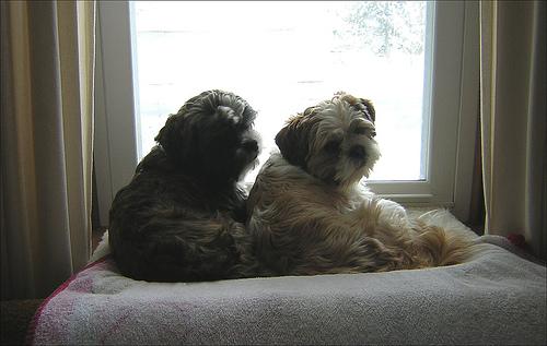 Creative Idea Of Pet Window Perch For Small Room Homesfeed