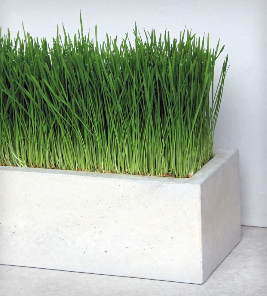 Concrete planter box designs homesfeed for Ornamental grasses for planters