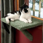 Simple Cool Wonderful Awesome Nice Dog Window Perch With Green Cover Design Concept For Cat And Nice Without Any Ladder 728x728