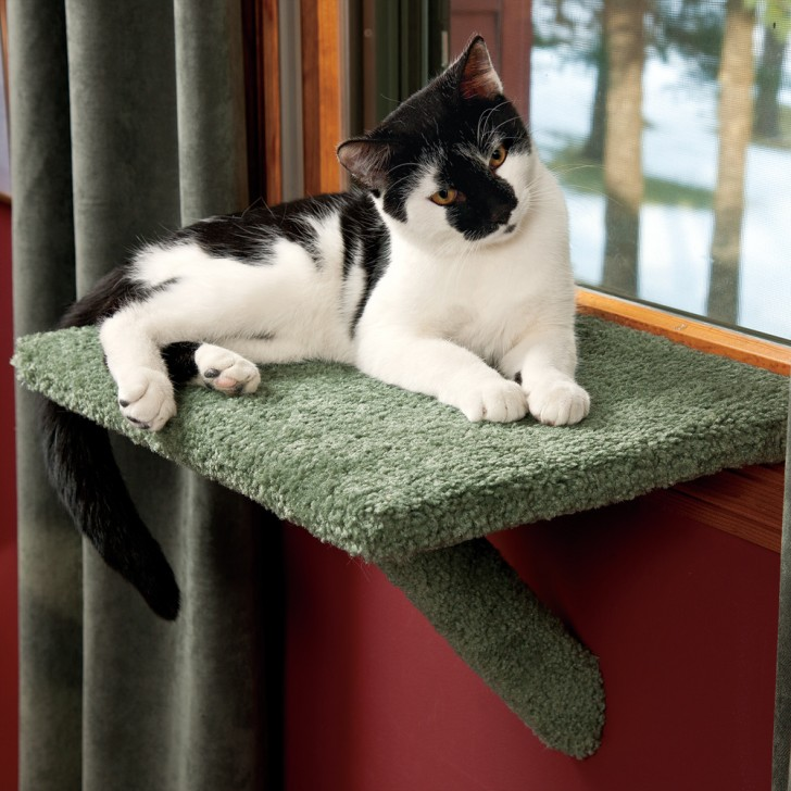 Creative idea of pet window perch for small room homesfeed for Cool cat perches