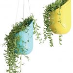 yellow  and blue hanging pots with small-leaves decorative plants