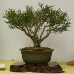 clay-made bonzai tree planter