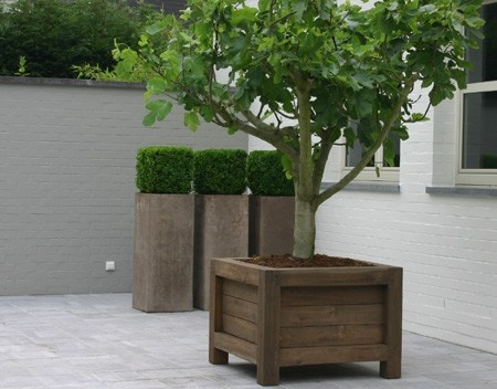 Incredible Design Of Wood Planter Boxes For Big Plants