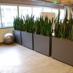 Wonderful Cool Typical Natural Fresh Office Divider With Square Vase And Green Plants Concept Not Too High Suitable For Small Office Room Decoration 728x489