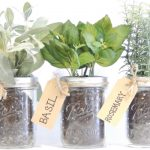 wonderful-nice-adorable-cool-creative-kit-mason-jar-with-Mason-Jar-Herb-Kit-concept-with-small-green-plants