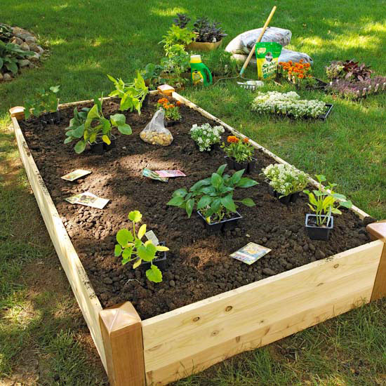 Raised Garden Bed Plants: Wood For Raised Beds: A Practical Way Of Gardening
