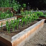 wood  boxes as media of growing the vegetables in the backyard