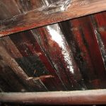annoying mold in attic in ceiling from wooden material