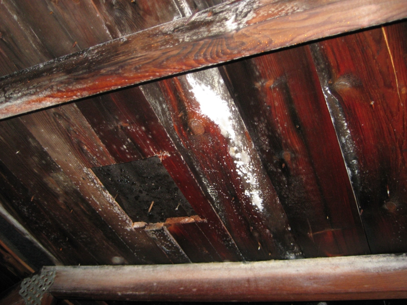 How To Get Rid Of Mould On Furniture How To Remove Black