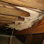 bad mold in attic in wooden ceiling material