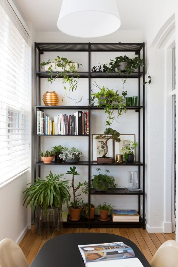 Ideas of Including Indoor Plant Shelves in Your Home\'s Decoration ...