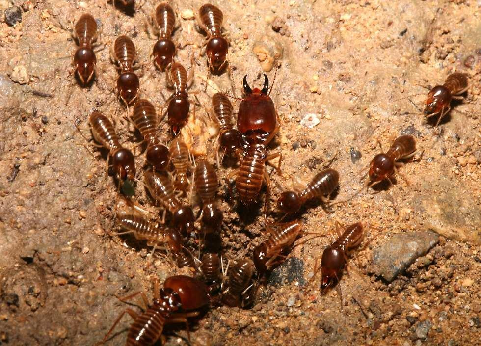 get rid the termites in furniture best solution