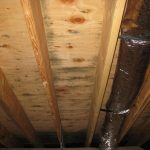 Mold In Attic In Ceiling From Wooden Material Home