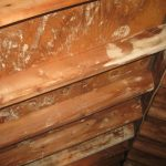 Mold In Attic On The Wooden Ceiling