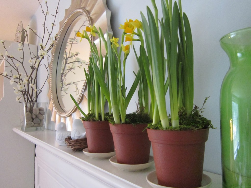 Ideas of including indoor plant shelves in your home s - Indoor plants decoration ideas ...