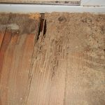 termites in furniture and mess wooden floor