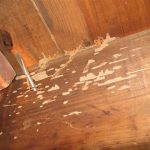 termites in furniture and wooden ceiling