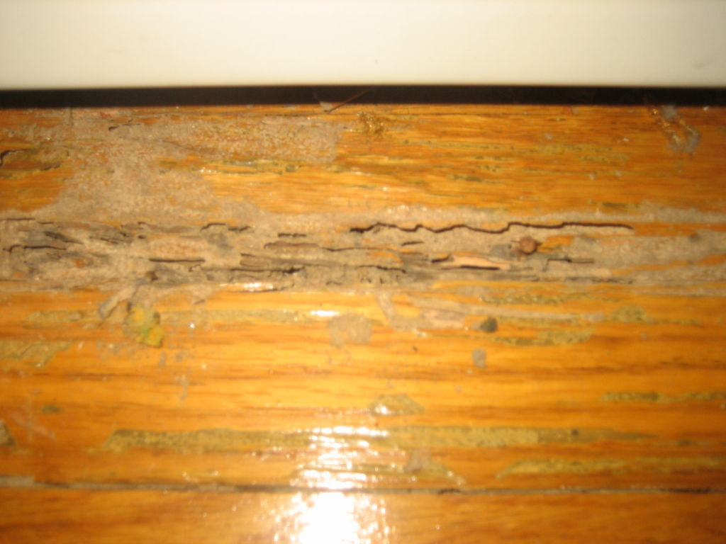 The Easy Methods How To Get Rid The Termites In Your