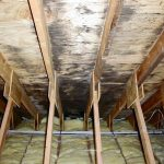 worst mold in attic with wooden ceiling