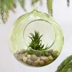 a hanging bowl potted plant for indoor with pebble and small greenery hanging beneath greenery