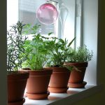 simple garden windows for kitchens with plant pots and glass art hanging on window frames home  decoration