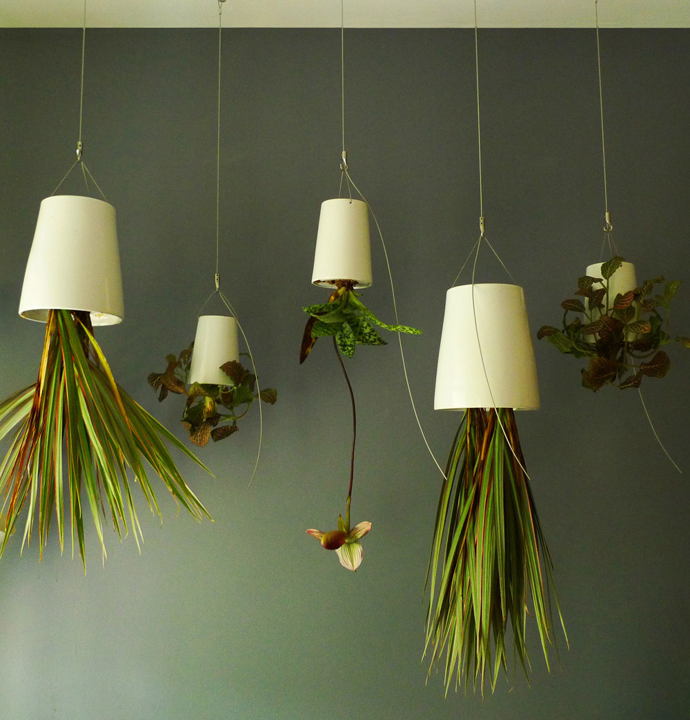 make up your interior with remarkable hanging plants for. Black Bedroom Furniture Sets. Home Design Ideas