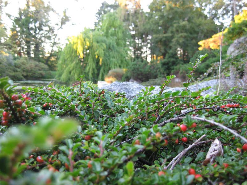 perennials for zone 7 for fresh home garden ideas