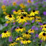 Wonderful Yelllow Perennials For Zone 7 For Garden Ideas