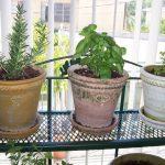 adorable interior apartment herb garden design on metal racks with white cream and yellow pots beneath glass siding