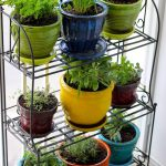 colorful apartment herb garden design for interior with metal racks in yellor green blue red and brown color pots on wooden floor