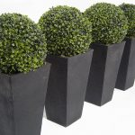 elegant black boxwood topiary balls design in white room and four amounts