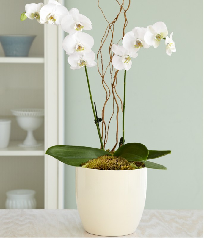 Elegant White Pot Design On Marble Top With Orchid Plant Decoration For Unique Interior