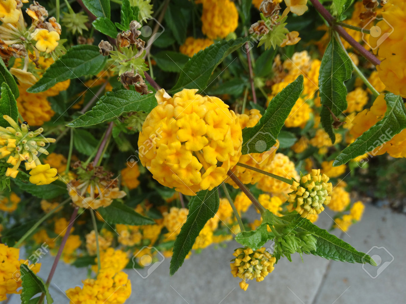 Some Beautiful Color Low Growing Flowers That You Must Add To The