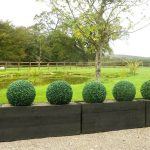 gorgeous outdoor box wood topiary balls design aside large grassy meadow with trees and patio