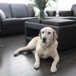 hardwood floor protection from pet scratches beautiful clean blackhardwood floor leather sectional sofa decorative flower