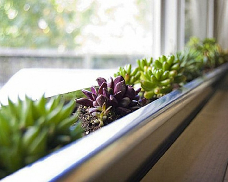 minimalist indoor greenery with unique plant in green and purple tone beneath glass wall