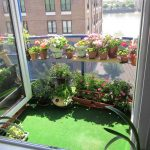 modern and sophisticated interior apartment herb garden idea with open plan and green rug and wall racks with pots