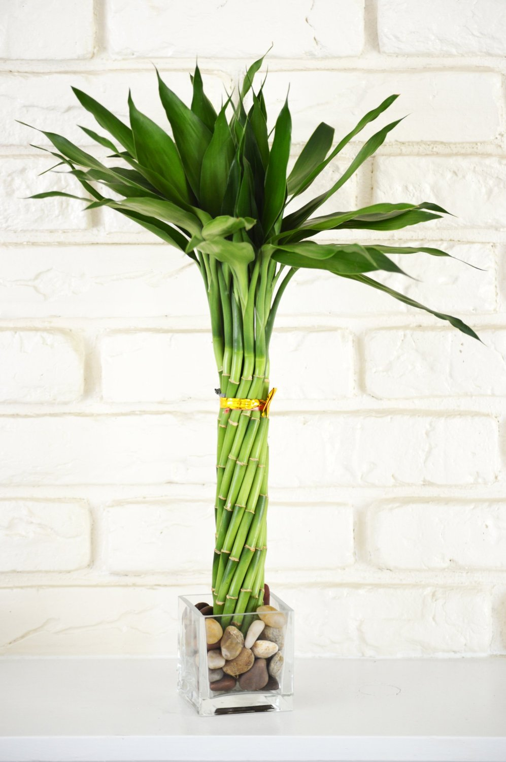 Unique Indoor Plants Simple Effort For Eco Friendly Home: weird plants to grow indoors