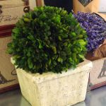 simple white boxwood topiary balls design aside lavender on glossy countertop