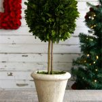 single and small boxwood topiary balls  design beneath white brick wall and greenery with red accent and wooden top