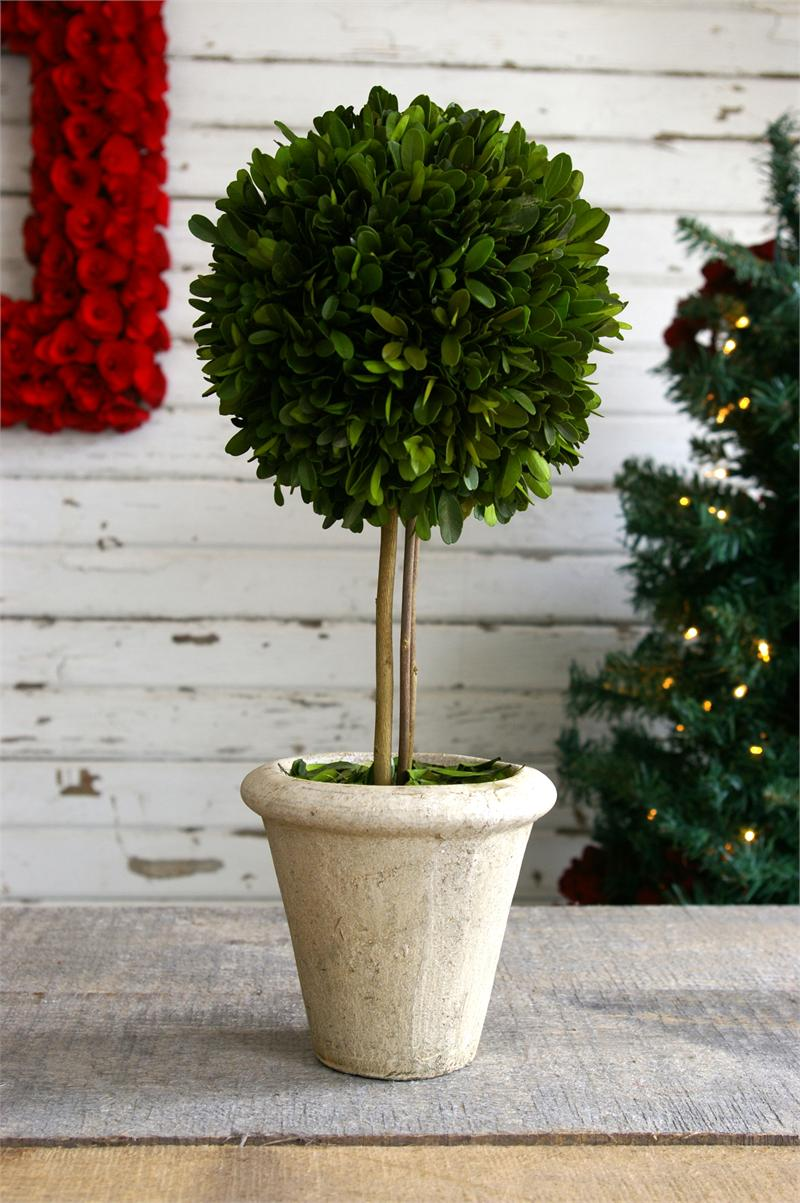 Boxwood Topiary Ball Offers the Joy of Minimalism and Simplicity ...