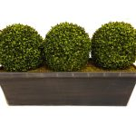 triple boxwood topiary balls idea on concrete planter for indoor outdoor garden