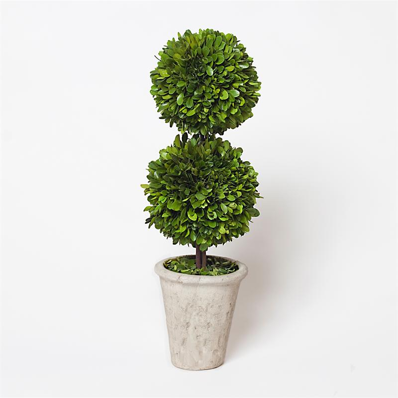 Boxwood Topiary Ball Offers The Joy Of Minimalism And